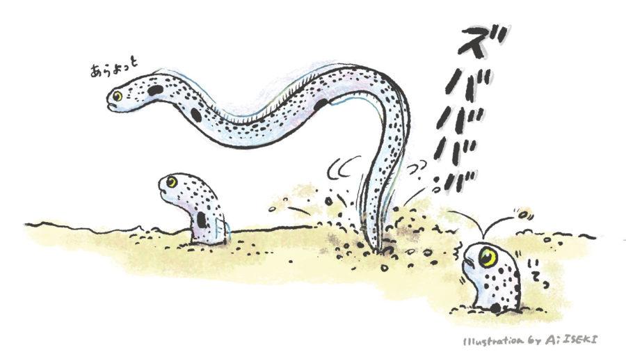 チンアナゴの尾びれ