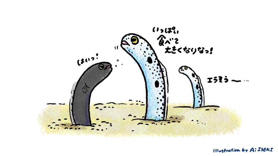 チンアナゴの幼魚